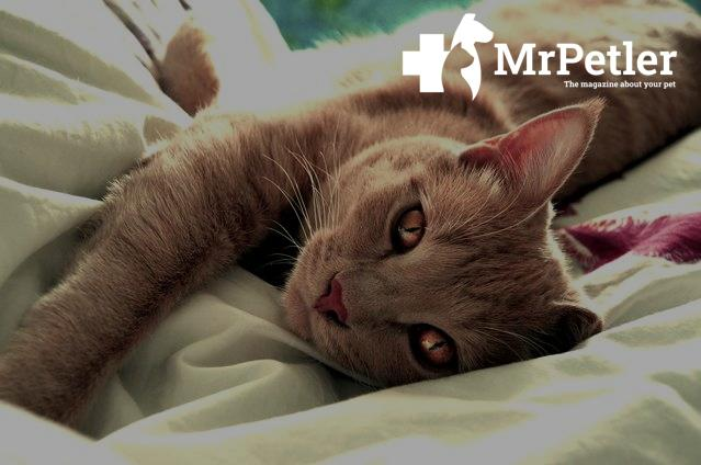 Symptoms of hyperparathyroidism in cats