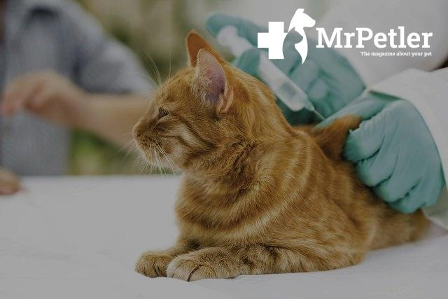 Vaccination of cats