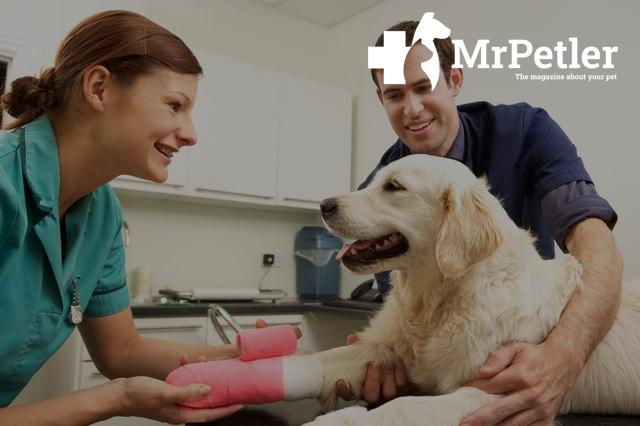 Treatment of dislocation in a dog