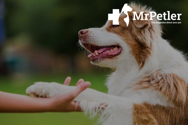 Paw treatment for a dog