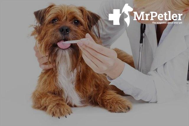 The doctor gives medicine to a dog