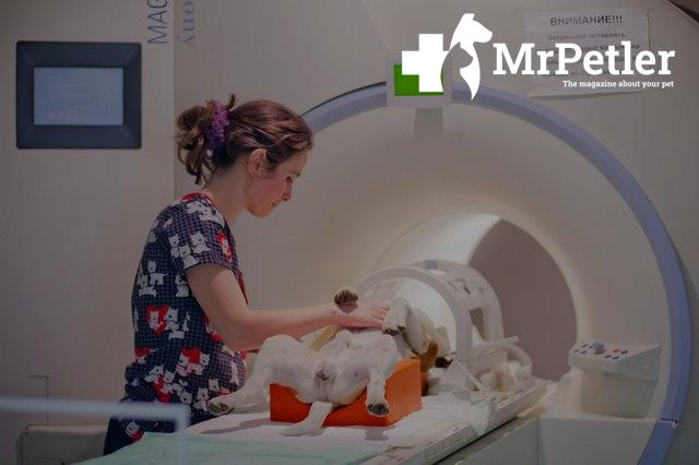 MRI for the dog