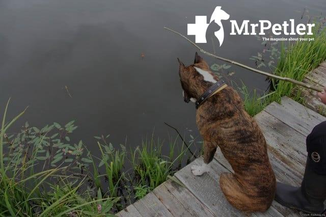 The dog looks at the water