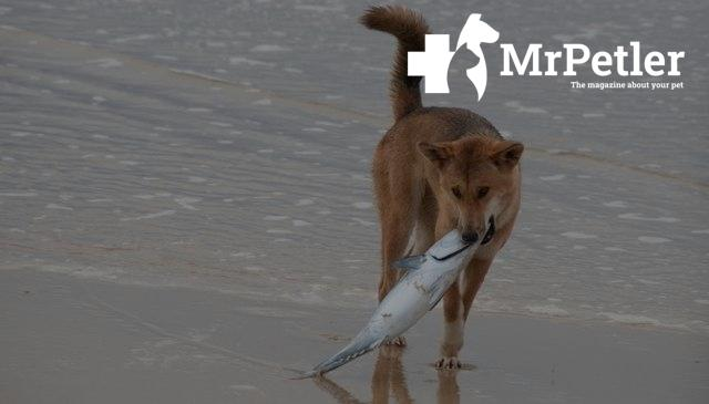 The dog caught a fish