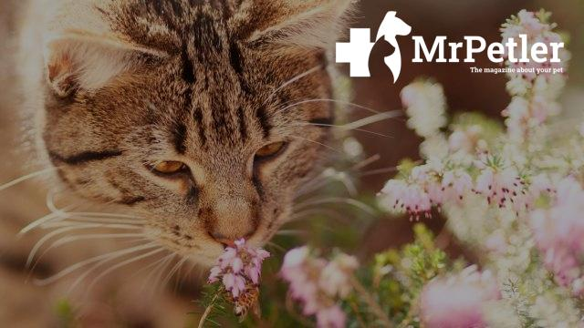 The cat sniffs the flowers