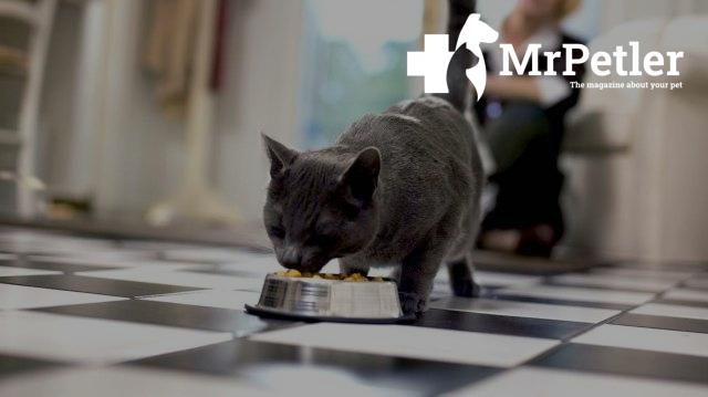 Cat eats from a bowl