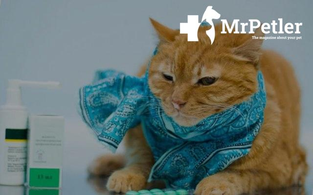 The cat next to the medicine