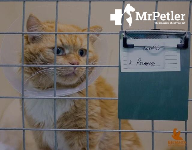 Red cat in a cage