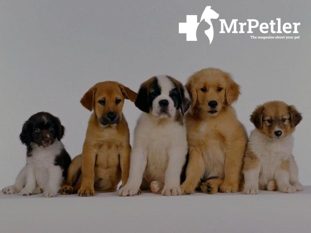 Several puppies