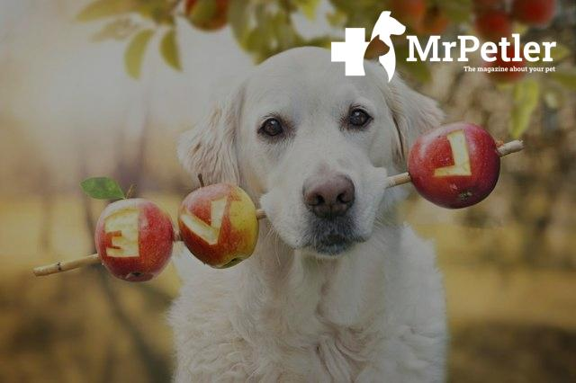 Dog holding a stick with apples