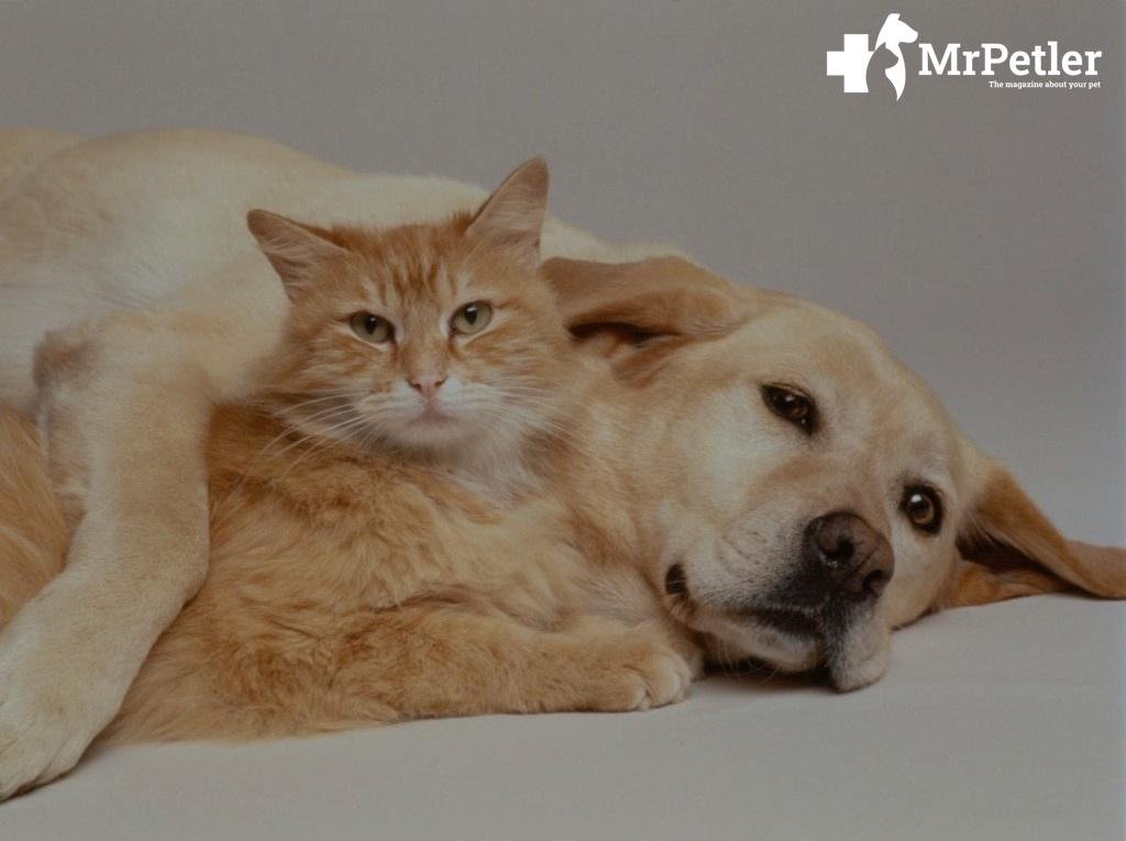 friendship of a cat and a dog