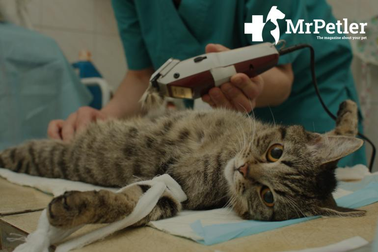 The cat before the operation