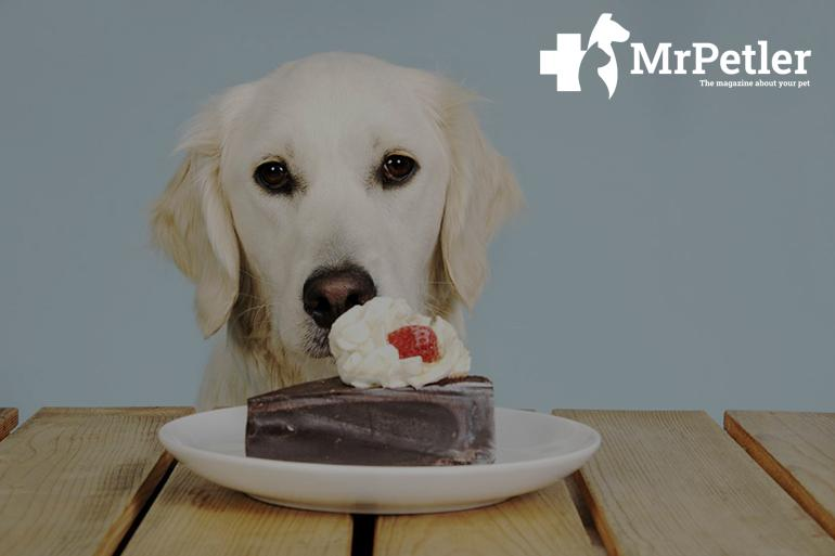 Dog and sweets