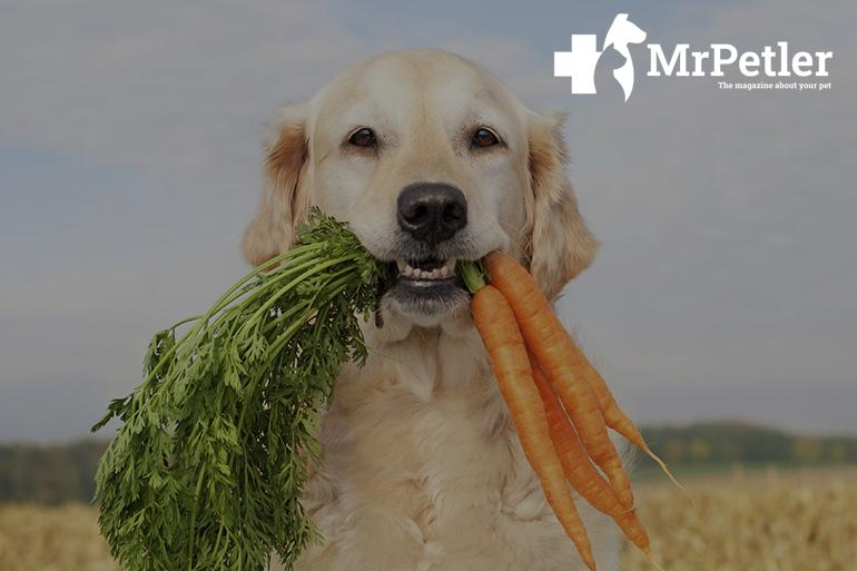 Dog with carrots