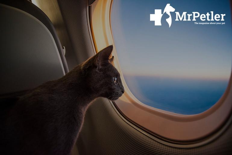 Cat on the plane