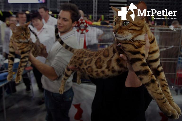 The cat at the exhibition