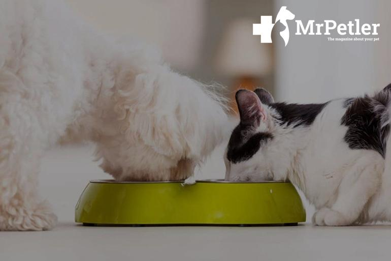 cat and dog are eating from the one bowl