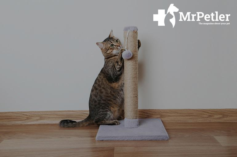 Cat and scratching post