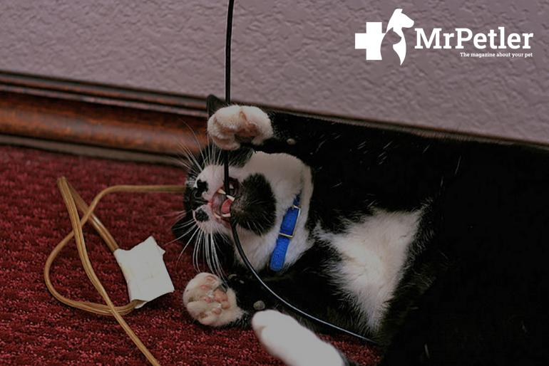 Cat playing with the wires