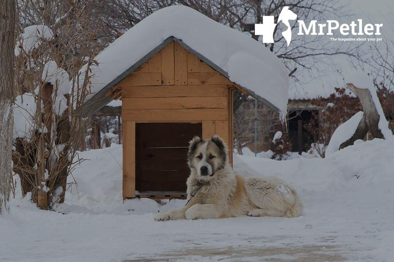Doghouse under the snow
