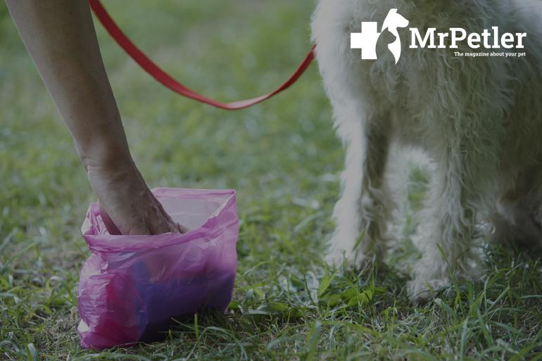 Cleaning for the dog