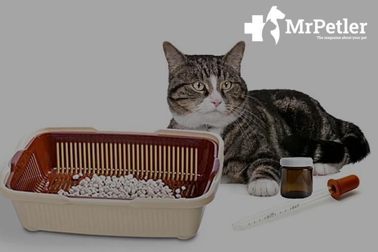 Collecting cat urine from the tray