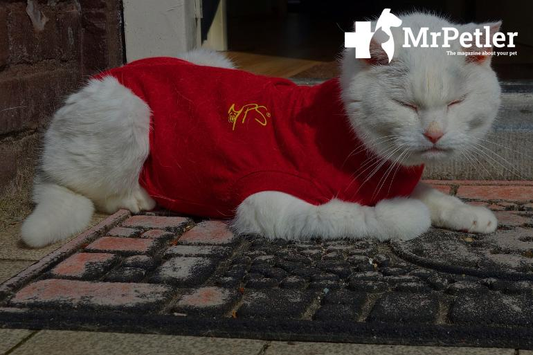 Clothing for cats
