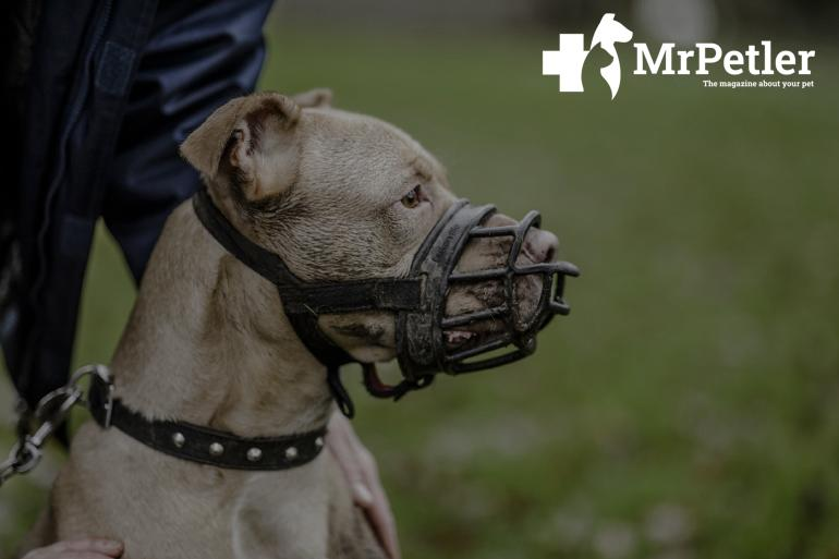 Muzzle for a dog